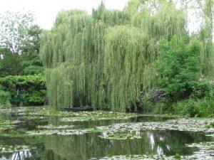 Monet's Garden Givery France 2013  (photo Joanna Richardson)